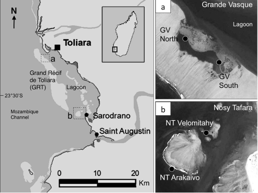 Previously unlisted scleractinian species recorded from the Great Reef of Toliara